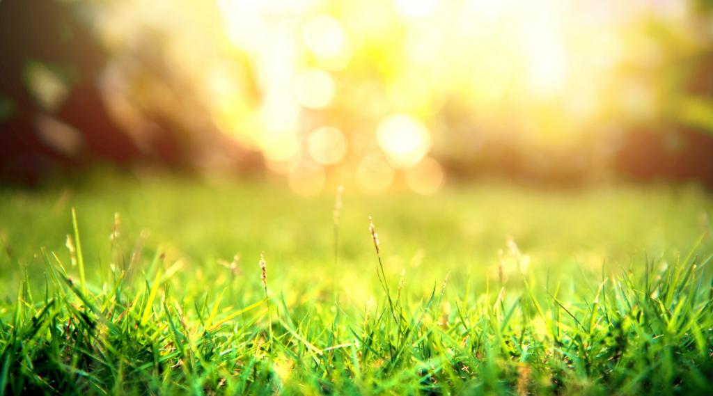 Er græsset grønnere i Ribe Marsken - Permeco